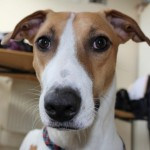 LENNY THE LURCHER MAR14