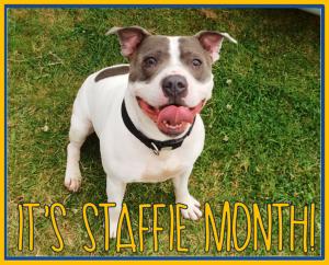 staffie month
