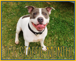 staffie month