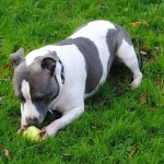 STAFFIE BELLA 008