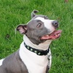 STAFFIE BELLA 015
