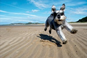 dog-photographer-runner-up-dogs-at-play-photo-runner-up-by-maureen-quinn