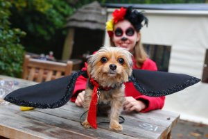 Lucy the Yorkshire Terrier dressed up with wings in Halloween fancy dress costumes for the All Dogs Matter Halloween Dog Walk to raise funds for the charity which houses and re-homes dogs in London.