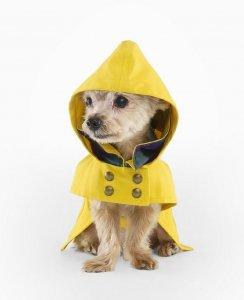rl_raincoat_1